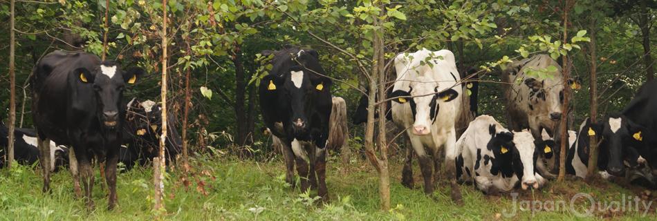 北海道で新規就農し17年。泣いた! 笑った!「牛と一緒に育ってきました」