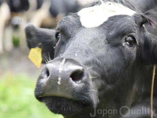 牛さんは尻尾をぶんぶん振り回して、ハエやアブを追い払う。【害虫との闘い】