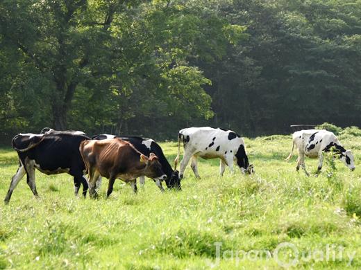牛さんにもそれぞれ名前がついている【名号(めいごう)】