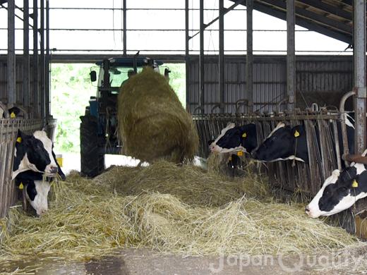 植物を乳酸発酵させて作る牛さんの飼料【サイレージ】