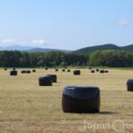 牧場に散らばる白や黒のラッピングは発酵飼料【ラップサイレージ/ロールベール】
