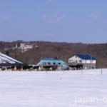 【見かけた】牛は寒さに強いけど、さすがに冬の放牧はめずらしい