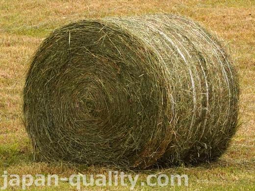 牧草を乾燥させた牛さんのごはん【乾草(かんそう)】