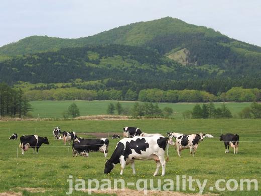 日本の牛の代表、ホルスタインの白黒模様にはルールがある【斑紋(はんもん)の決まり】