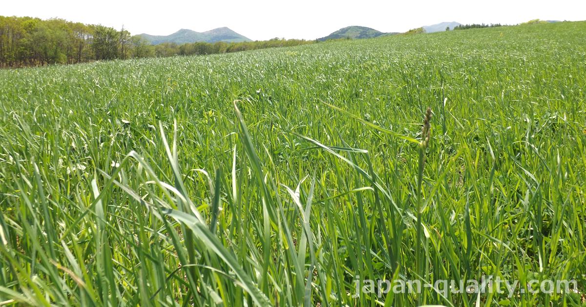 【聞いてみた】6~7月の長雨や豪雨が、日本各地の酪農家に与えた影響とは?