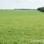 【旅行者の皆さんへ】空き地の草原に見えても、牧草地である場合が。立ち入りは控えましょう