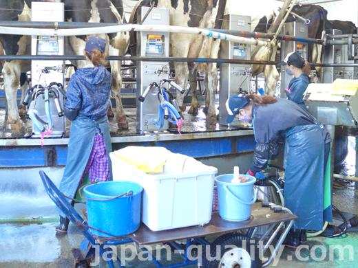 牛さんが回るタイプの搾乳施設【ロータリーパーラー】