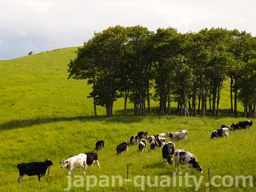 害のない草から自分の牛房まで、何でも嗅ぎ分ける【牛の嗅覚】