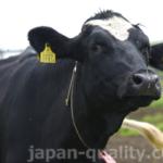牛さんが両耳につけている黄色いタグは【耳標(じひょう)】