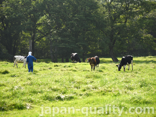 酪農家が休みを取る時に、作業を代行する【酪農ヘルパー】