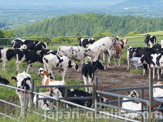効率よい搾乳サイクルのため、見逃さず発見したい【牛の発情】