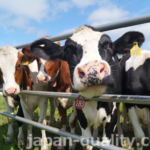 お母さん牛になる前の期待の新人たち【育成牛】