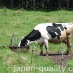 牛舎内にも放牧地にも、たっぷり飲める牛の水飲み場【水槽(すいそう)】がある