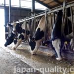 食品残さ等を利用して作る飼料、【エコフィード】は地域色豊か