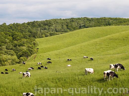 酪農家から若牛を預かって、妊娠するまで育てる【育成牧場】