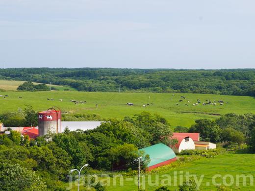 広い牧草地が必要な【放牧酪農】は日本では少数派