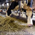 牛に必要な栄養量を計算し、飼料をプランニングする専門家もいる【飼料設計者】